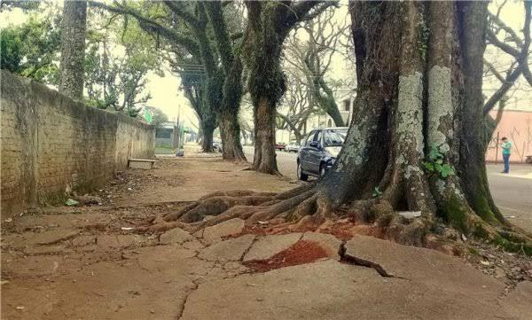 Remoção de raízes de árvores